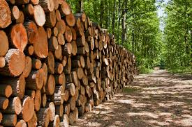 Zambia will be a major exporter of timber -Mulusa